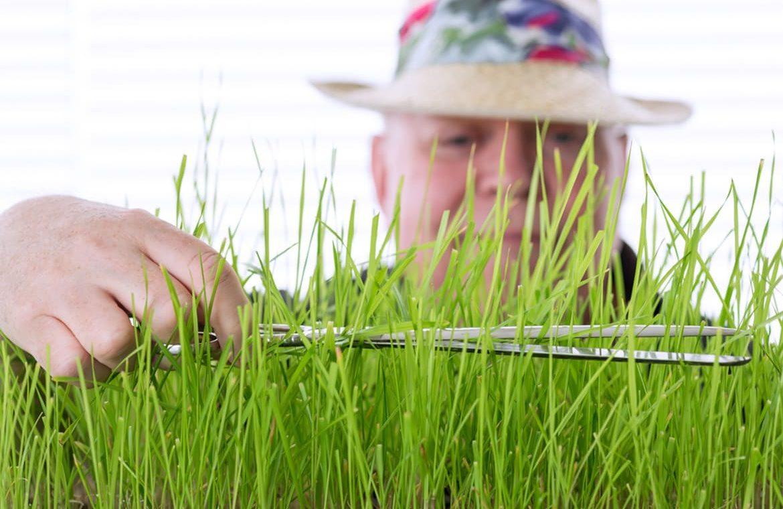 Gärtner schneidet Rasen mit Schere
