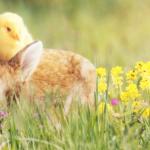 Küken und Osterhase im Gras